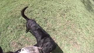White Paw Professional Dog Training - Attack Training Ol Pejeta Kenya