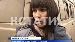 Концлагерь для собак в Нижнем Новгороде устроили ловцы собак из Дзержинска