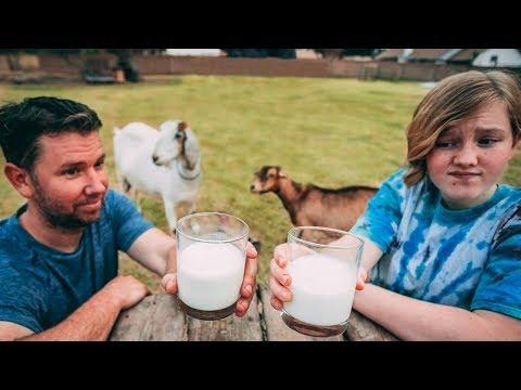 Taste Test Challenge: Which goat has the BEST milk?