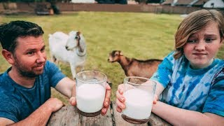 Taste Test Challenge: Which goat has the BEST milk?