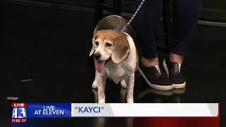 KAYCI - Fox 13 Best Friend from the Humane Society of Utah