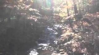 Auresville Creek