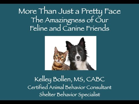 Kelley Bollen keynote address at Saving Nevada's Pets Conference 2018 in Las Vegas