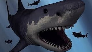 Siêu cá mập lớn nhất Trái Đất Megalodon biến mất, vì sao?