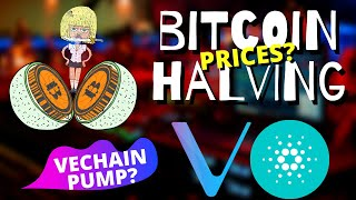 BITCOIN AND CRYPTO EVERYWHERE | BTC Halving Price | Vechain Microsoft? Cardano ADA, Enjin ENJ News