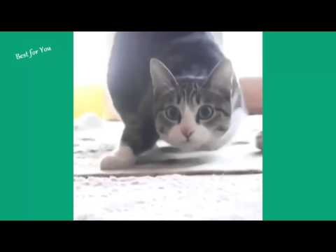 Funniest cats in the whole world