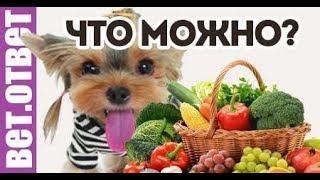 Какие фрукты и овощи можно собаке? Итоги розыгрыша.