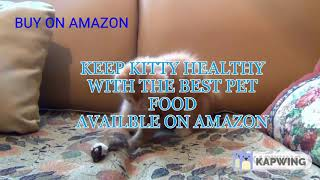BEST RATED CAT FOOD ON AMAZON