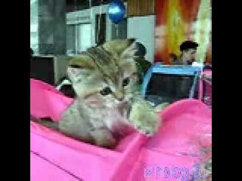 Ижевские кошки