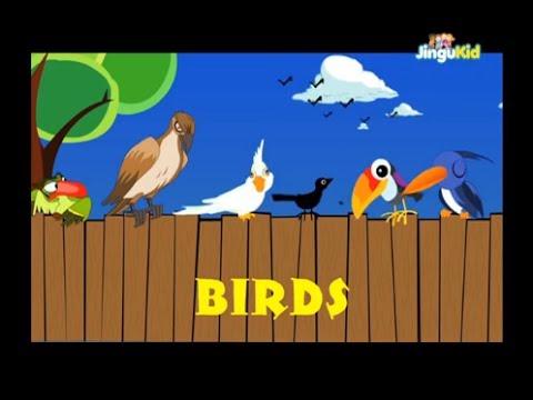 How to Identify Birds | Audubon