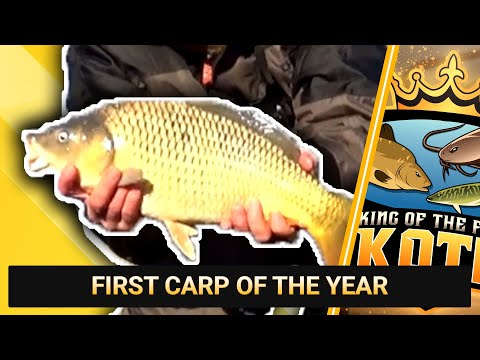 FIRST CARP OF THE YEAR || WILLOWS ANGLING CENTRE, SITTINGBOURNE