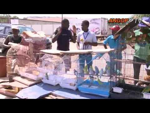 Destaque Nacional:  Venda de pássaros - um negócio que cresce em Luanda (final)