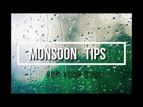 Monsoon Tips || Monsoon tips for dogs || Dog care || Happy Pooch