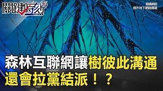樹也會聊天!森林中的互聯網讓樹木彼此溝通… 還會拉黨結派!? 關鍵時刻 20180717-3 黃創夏