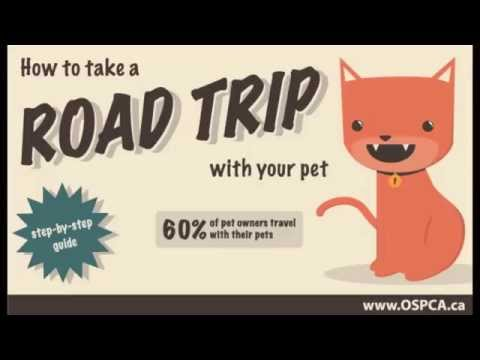 How to Take a Road Trip - Step-by-step Guide