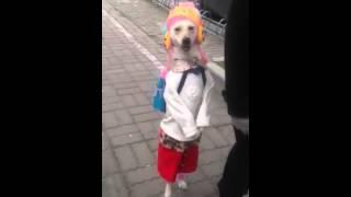 Собака идет по улице
