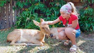САМЫЙ КРУТОЙ ЗООПАРК Алёна и Даша кормят животных