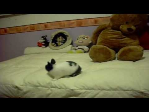 Cute bunny: Jumping on my bed ^^
