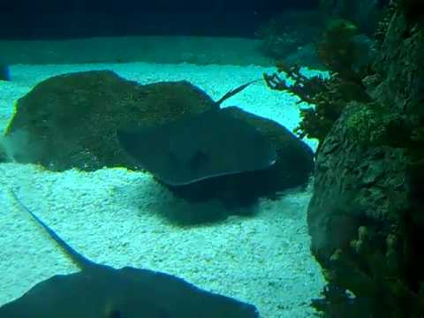 Aquarium At Henry Doorly Zoo Youtube