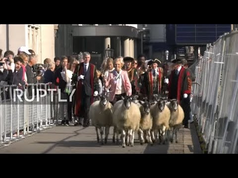 LIVE: BAAA-rmy army of sheep takes over London Bridge