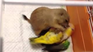 Суслик и попугай!Супер забавное видео!