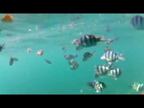 Tioman Island underwater Gopro - Malaysia