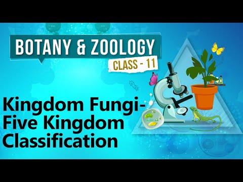 Kingdom Fungi - Five Kingdom Classification - Diversity in Organisms - Biology Class 11