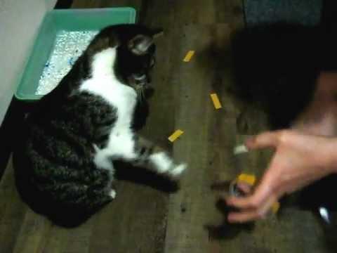 Какой запах отпугивает кошек и котов