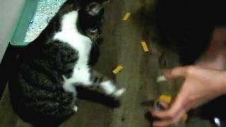видео Как отучить кота метить.Как отучить кота метить квартиру.