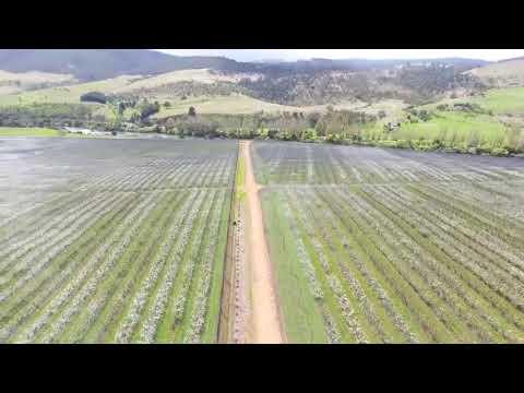Reid Fruits Blossom 2017 (Plenty, Tasmania)