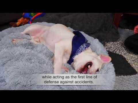 super-soft-washable-dog-bed