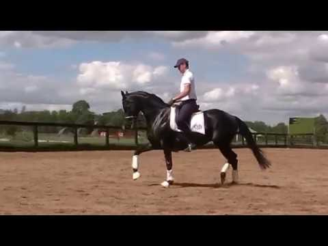 HerzAssW (imported Trakehner Verband Premium State Mare) at Stefan Wolfe Clinic day 3.3