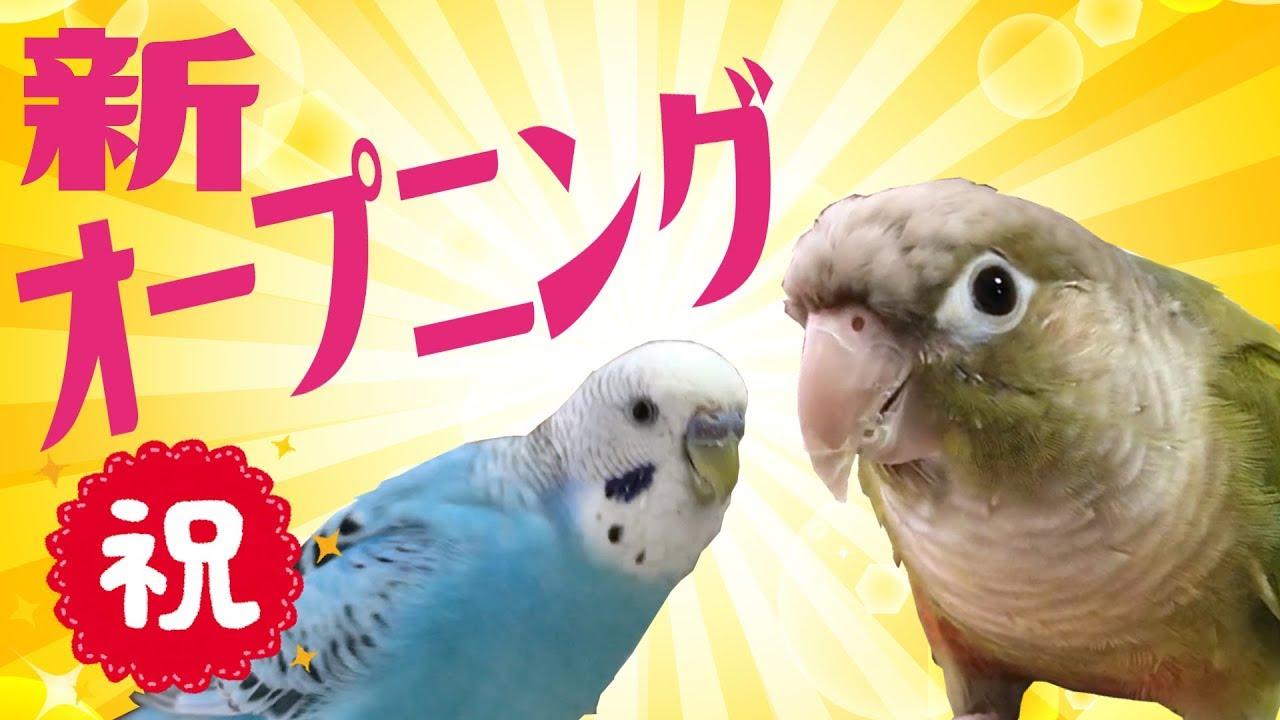 うめ ごま ブラザーズ うちで踊ろう/星野源×うめごまブラザーズ - YouTube