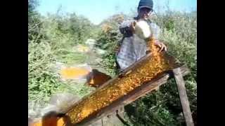 облепиха.отделяем ягоду от листьев.быстрый способ переборки