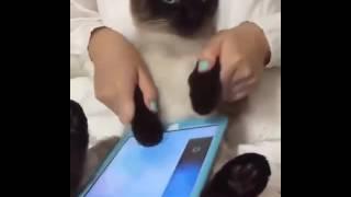 Fun for cats on ipad
