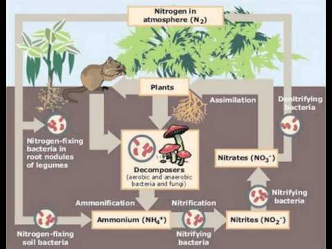 Lab 8 Nitrogen Fixation