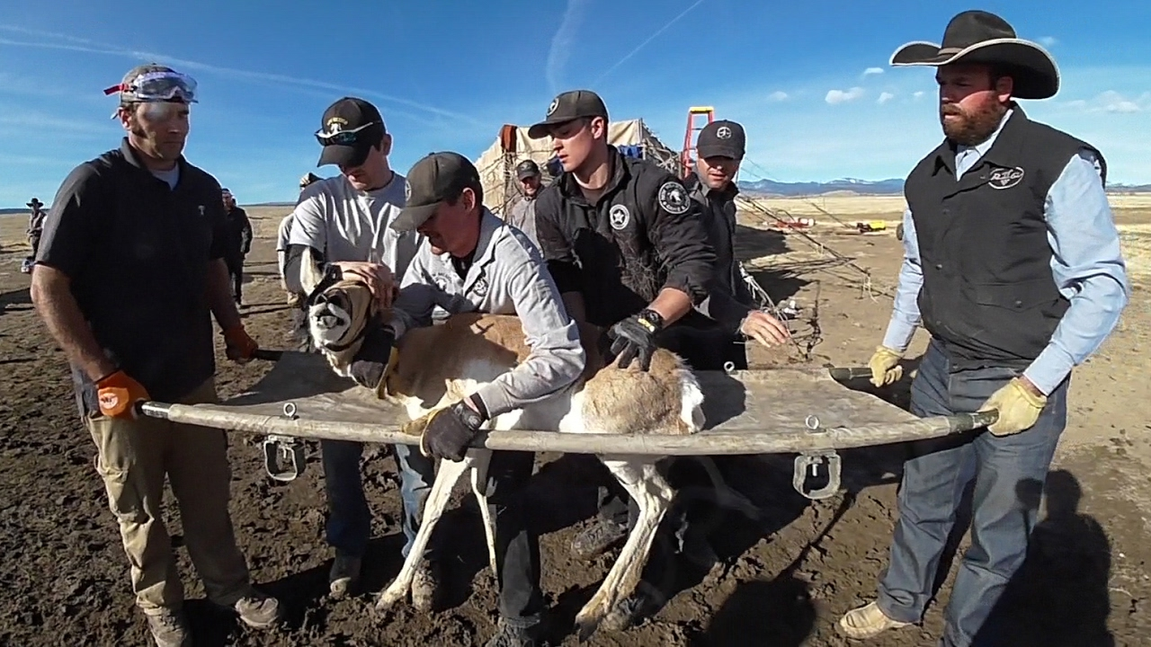 New mexico pronghorn antelope translocation youtube for New mexico game and fish login