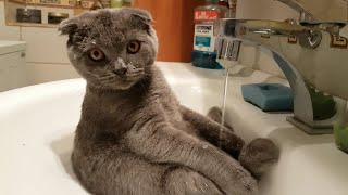 猫ゆうのはきれい好きなわけやし。自ら進んで洗面台で体を洗う猫