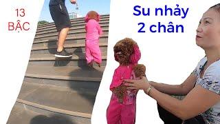 Xem Su Xí Xọn, cô chó đi 2 chân, chinh phục 13 bậc cầu thang, phần 3 II ĐỘC LẠ BÌNH DƯƠNG