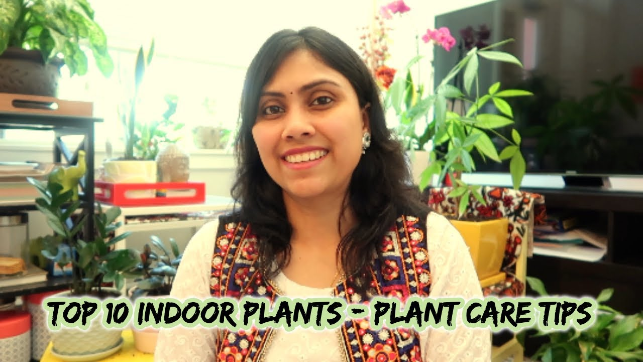 Top 10 low Maintenance Indoor Plants for beginners - Easy Plant Care tips - in Hindi