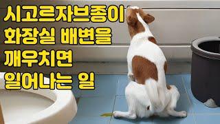 강아지 배변훈련 화장실 장점 단점과 교육방법 part …