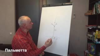видео Подвой для яблони - разновидности, особенности выращивания и уход