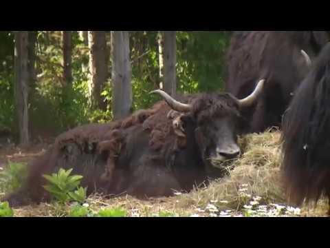 Northern Gardener - Spruce Haven Zoo
