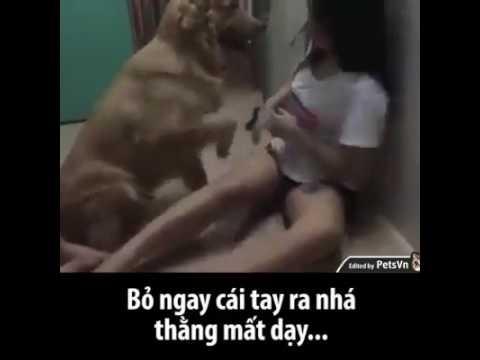 Chó chịch xg