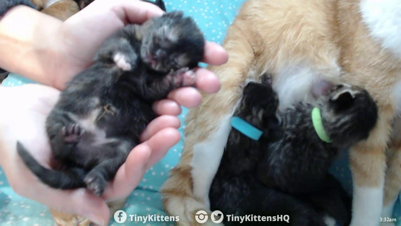 Extreme sleeping kitten closeup of Brie - TinyKittens.com
