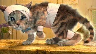 ПРИКЛЮЧЕНИЕ МАЛЕНЬКОГО КОТЕНКА мультик смешное видео для детей мультфильм про котиков #ГАМИКС