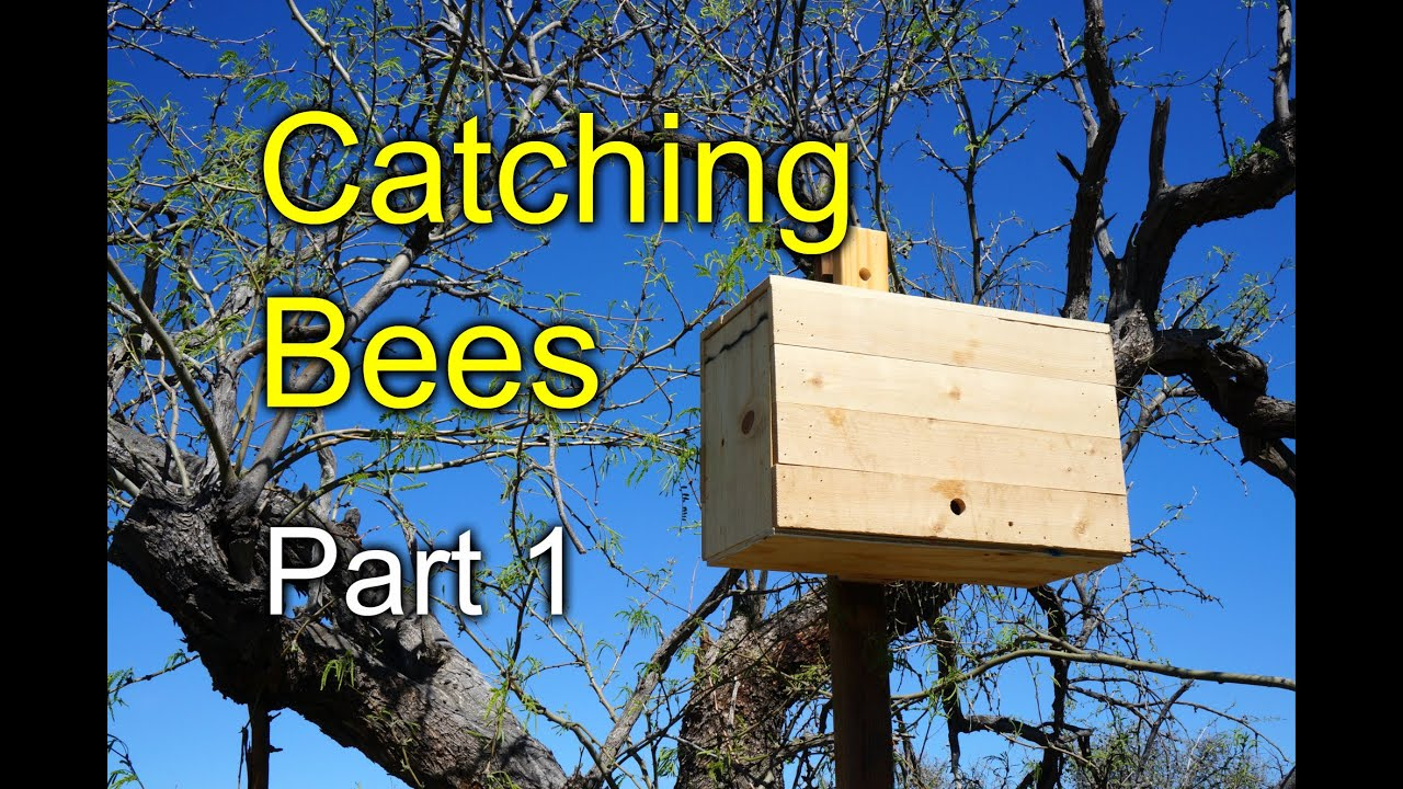 Trying To Catch Bees With Swarm Traps Part 1