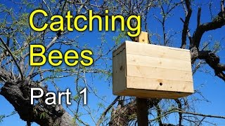 Trying to catch bees with Swarm Traps: part 1