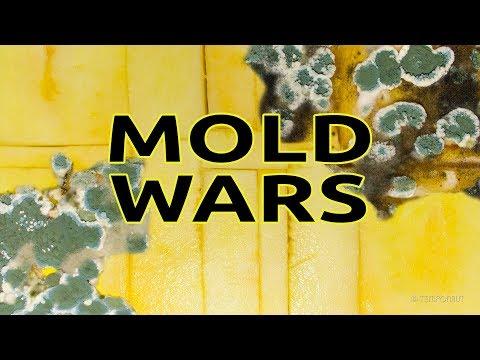 Mold Wars Timelapse