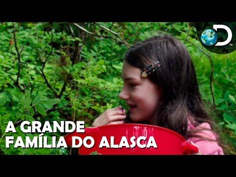 O perigoso e delicioso trabalho de colher frutas vermelhas - A Grande Família do Alasca